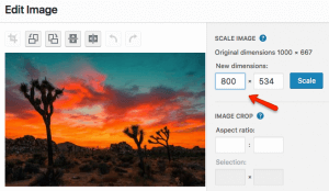 Optimize images by scaling them down